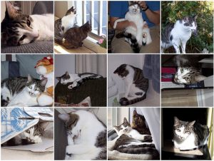 7 Years of Chester the Tabby Cat