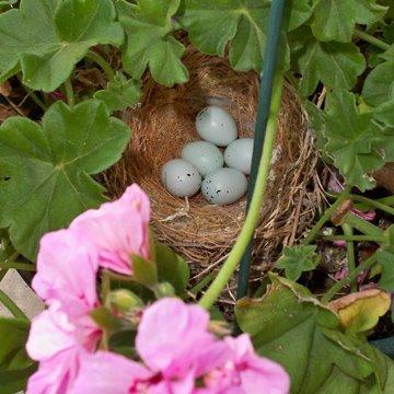 Day 1: Eggs in Bird's Nest