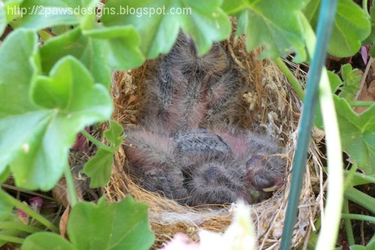 Day 14: Bird's Nest photo