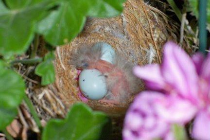Day 7: Hatching Eggs in Bird's Nest