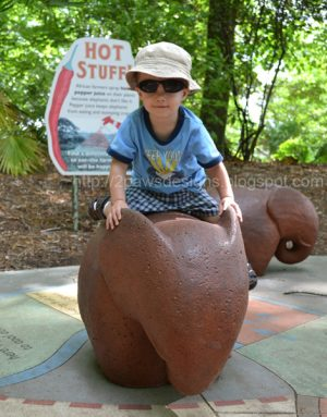 Wordless Wednesday: NC Zoo - Elephant Game