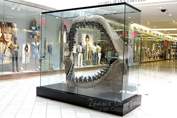 Megalodon Shark Jaw Model