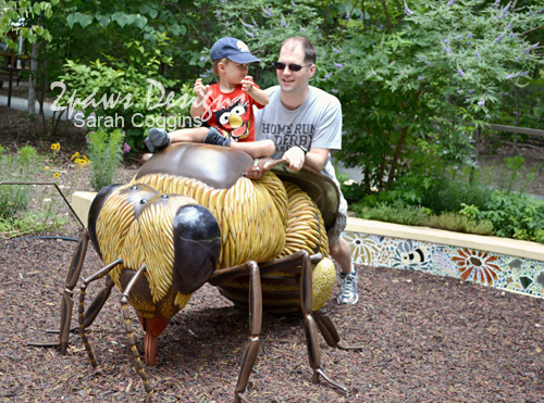 NC Zoo - June 2012: Bee Driving