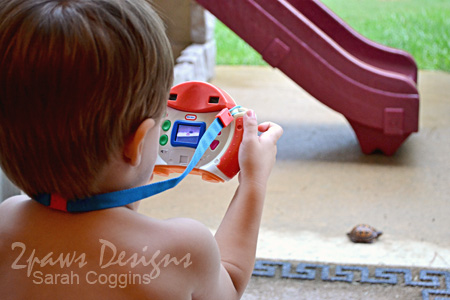Box Turtle - Little Photographer