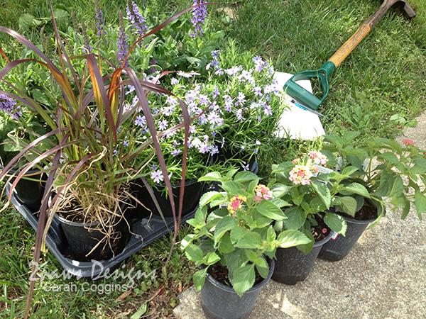 Mailbox Garden: Perennials