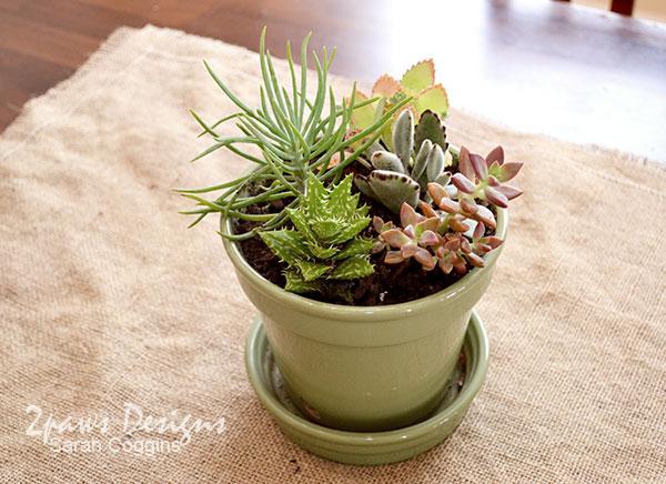 Four-esta Party: Burlap and Succulents