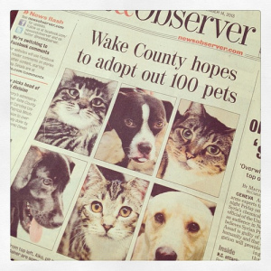 """Looking at paper over breakfast. D asked why there were cats & dogs on front page. I said because they need a home. He asked why. I said they don't have one. He said, """"that's sad. Everyone needs a home."""" #weekinthelife #preschooler #truth"""