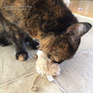 Cali Cat: 14th Birthday