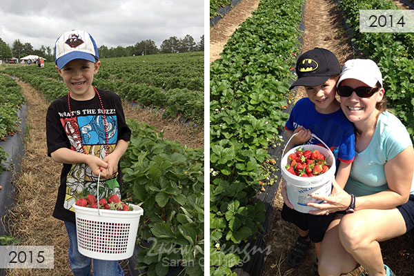 Mother's Day Tradition: Strawberry Picking