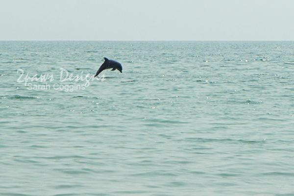 Emerald Isle, NC 2015: Dolphin Jumping