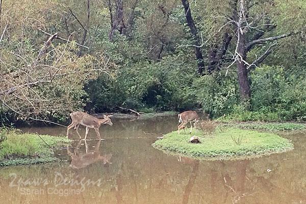 Deer at Lake Lynn Park - September 2015