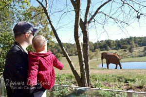NC Zoo: Elephants Oct 2015