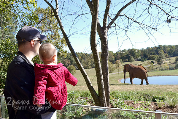 NC Zoo: Elephants Oct 2015