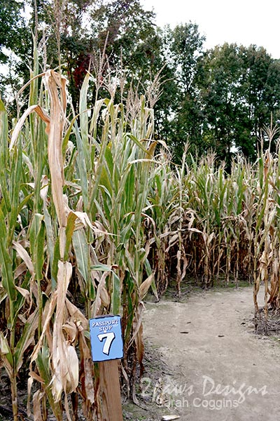 Phillips Farm: Corn Maze