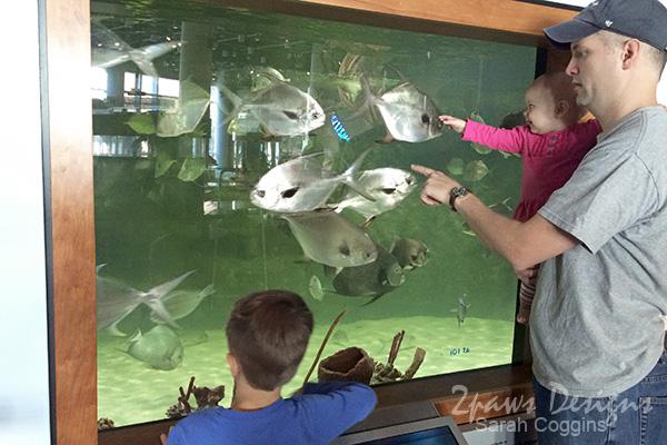 Museum of Natural Sciences - Nature Research Center: Aquarium