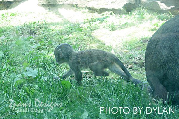 Smithsonian's National Zoo: Baby Monkey - Washington, D.C.