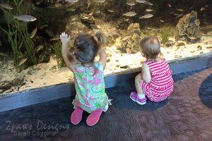 Project 52 Photos 2016: Aquarium