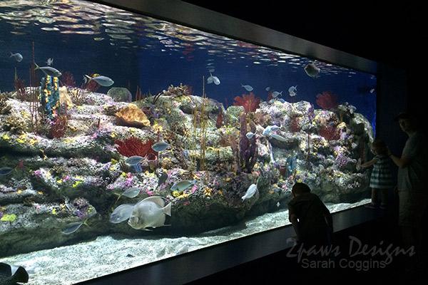 Fort Fisher Aquarium 2016