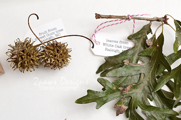 Nature Pal Exchange Collection - Fall 2016: Sweet Gum fruit and Oak leaves
