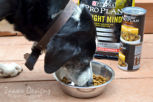Purina® Pro Plan® Bright Mind Dinner #ad #ProPlanPossibilities